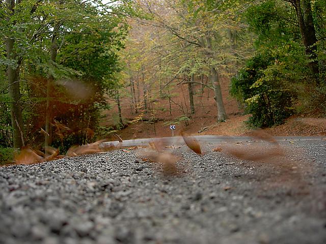 Carretera en otono